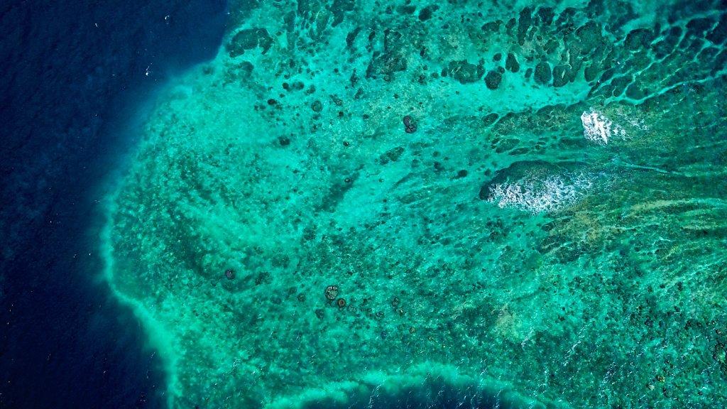 Récifs translucides